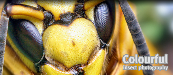 50+ pictures of amazingly colourful insects